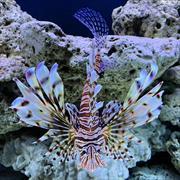 Чистка аквариума с вызовом на дом, Кирилл, 37 лет